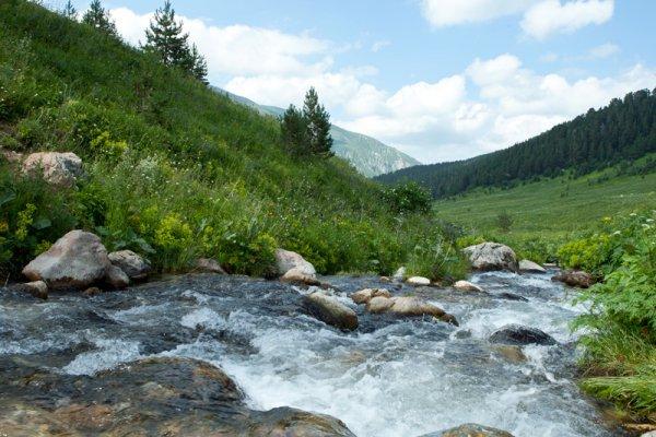 Река Цеце